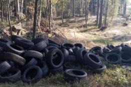 Foto: Facebook/Nadleśnictwo Lipusz, Lasy Państwowe