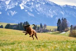 Hundeuralub in den polnischen Bergen